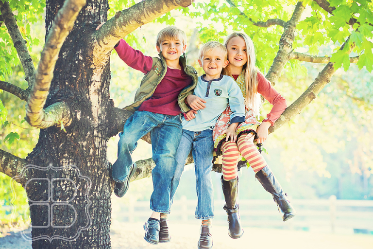 Kids in a tree photo